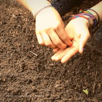 het belang van gezonde grond