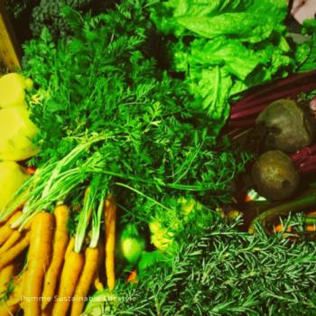 hoe gezond is groente?