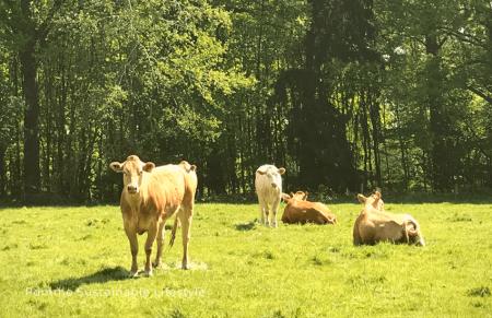 vlees, het dilemma